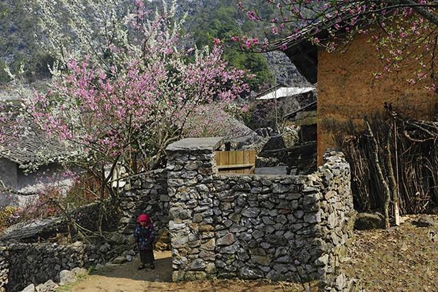 Mùa xuân trên cao nguyên đá (Hà Giang)