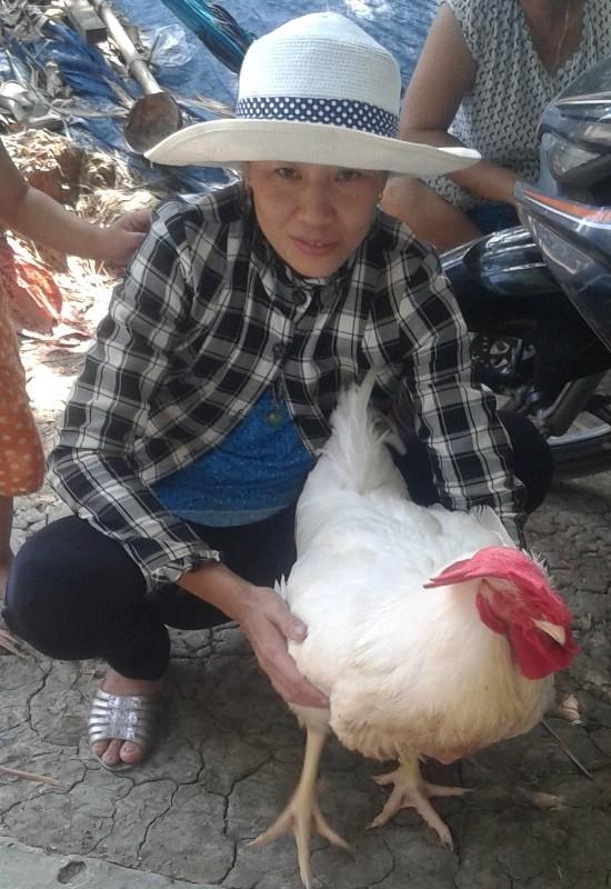 Sự thật về giống gà 'lạ' đang tràn về nông thôn - ảnh 2