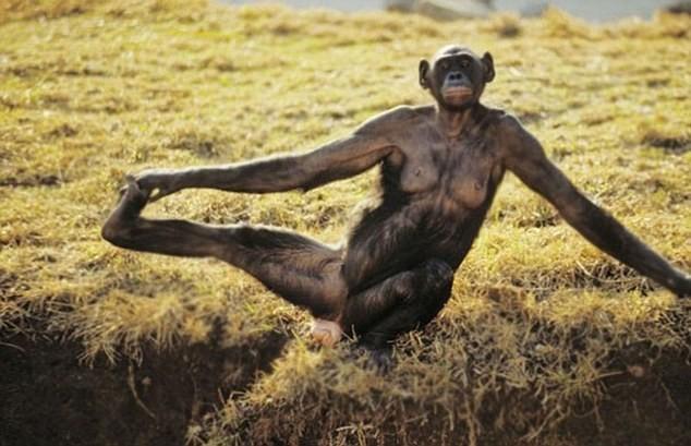 Cùng thư giãn với những động tác yoga 'siêu chuẩn' của loài vật - ảnh 3