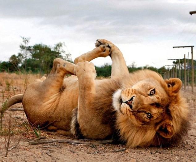 Cùng thư giãn với những động tác yoga 'siêu chuẩn' của loài vật - ảnh 5