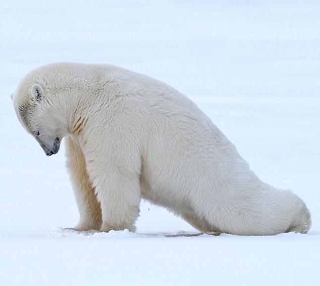 Cùng thư giãn với những động tác yoga 'siêu chuẩn' của loài vật - ảnh 6
