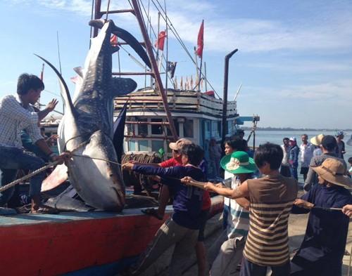Đưa cá voi khoảng nửa tấn vào bờ chôn cất - ảnh 1