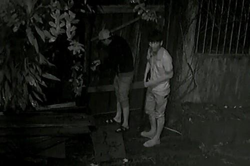 Camera ghi hình 4 thanh niên lái ô tô đi ăn trộm gỗ trong đêm - ảnh 2