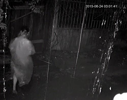 Camera ghi hình 4 thanh niên lái ô tô đi ăn trộm gỗ trong đêm - ảnh 4