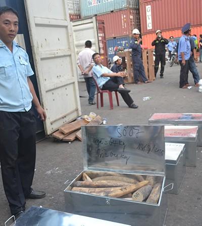 Cận cảnh ba container chứa hơn 2,2 tấn ngà voi ở Đà Nẵng - ảnh 3
