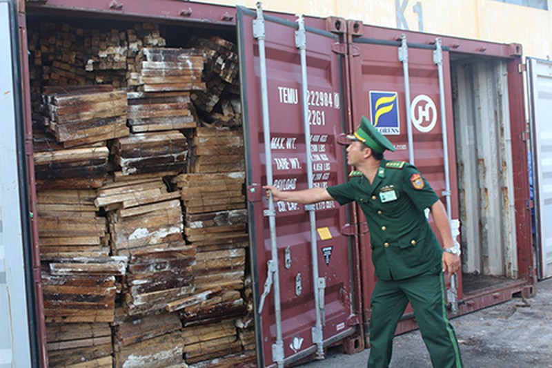 Cận cảnh ba container chứa hơn 2,2 tấn ngà voi ở Đà Nẵng - ảnh 1