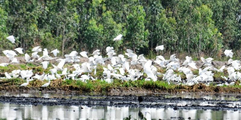 Láng Sen Long An thành khu Ramsar thứ bảy của Việt Nam - ảnh 1