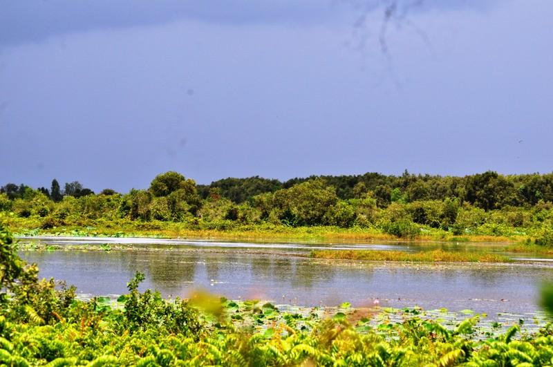 Láng Sen Long An thành khu Ramsar thứ bảy của Việt Nam - ảnh 2