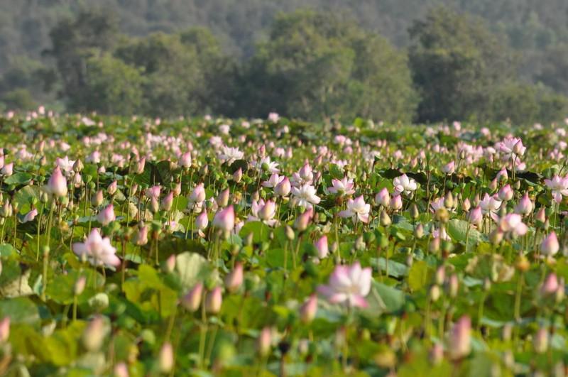 Láng Sen Long An thành khu Ramsar thứ bảy của Việt Nam - ảnh 3