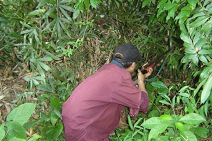 Đi săn, bắn bạn tử vong vì tưởng là… khỉ - ảnh 1