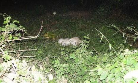 Tìm được tung tích cô gái chết khỏa thân trong bao tải  - ảnh 2