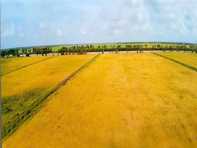 VinEco hợp tác với Trung An ra mắt sản phẩm gạo sạch  - ảnh 2