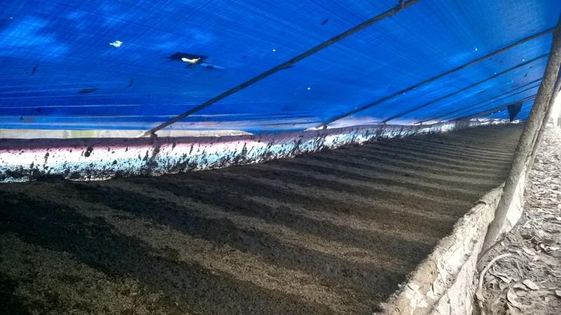 Giấc mơ phân trùn quế và nông nghiệp hữu cơ bền vững - ảnh 2