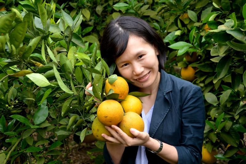 Hành trình trồng cam sạch của cô gái xứ Nghệ - ảnh 2