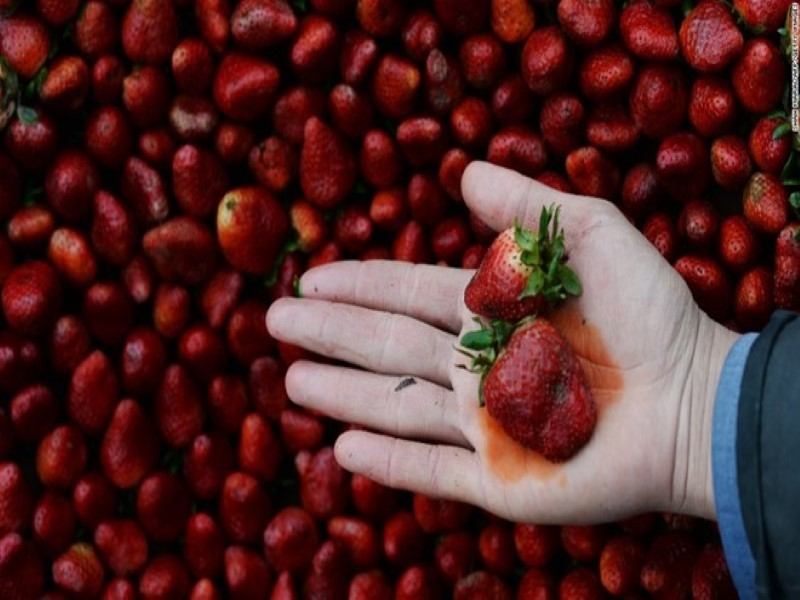 Dùng thực phẩm nhập từ châu Âu chưa chắc an toàn - ảnh 1