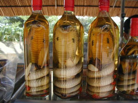 Uống nhiều rượu ngâm có chắc 'bổ'? - ảnh 1