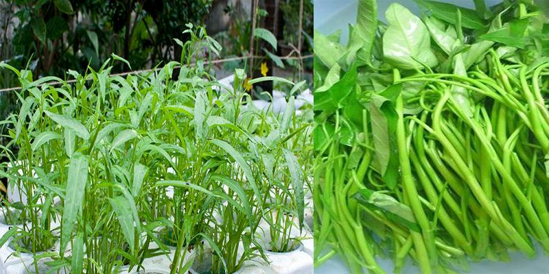 Cách nhận biết rau có hóa chất - ảnh 1