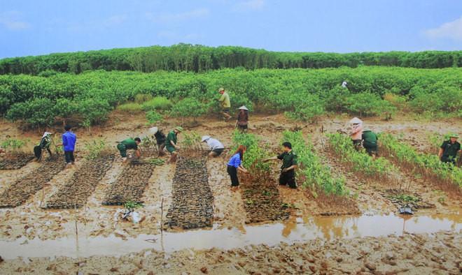 Những bức ảnh về sự biến đổi môi trường sống ở Việt Nam - ảnh 12