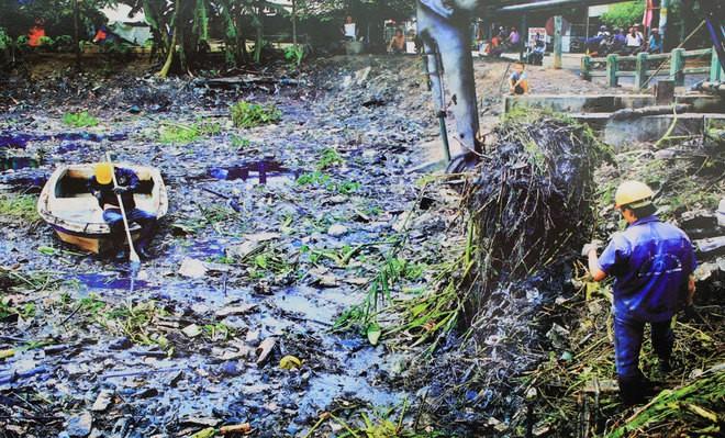 Những bức ảnh về sự biến đổi môi trường sống ở Việt Nam - ảnh 1