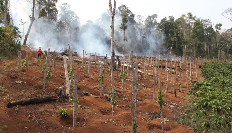 Đình chỉ công tác chủ tịch xã để mất rừng - ảnh 1