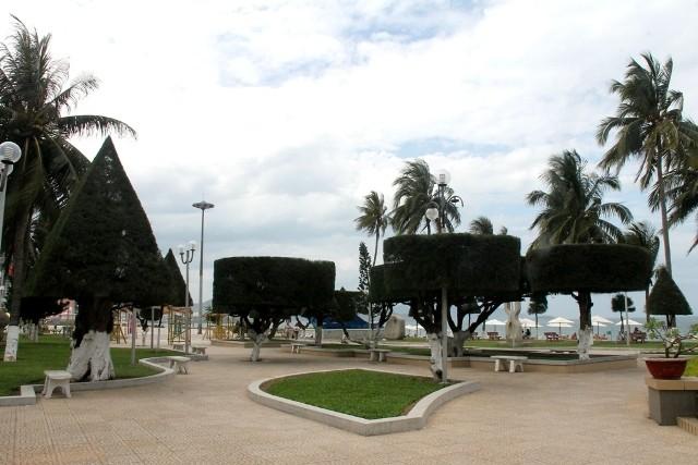 Cứu lấy hàng phi lao cổ thụ dọc bờ biển Nha Trang - ảnh 8