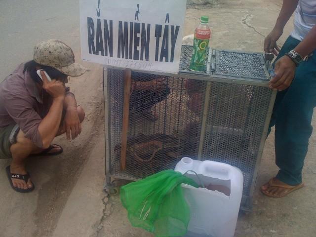 Rắn độc xuống đường phố Biên Hòa - ảnh 2