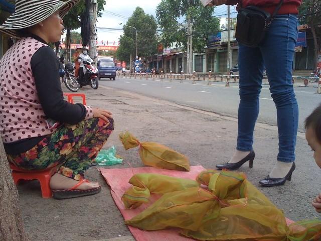Rắn độc xuống đường phố Biên Hòa - ảnh 3