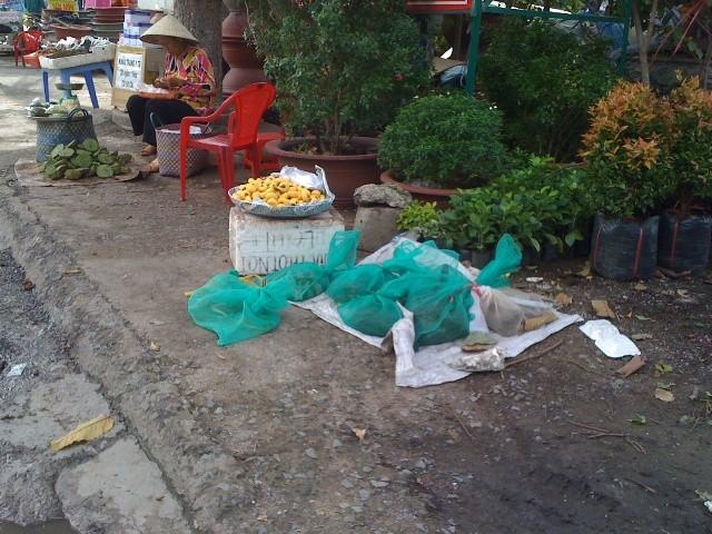 Rắn độc xuống đường phố Biên Hòa - ảnh 4