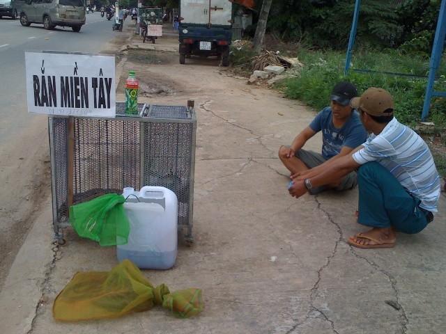 Rắn độc xuống đường phố Biên Hòa - ảnh 1