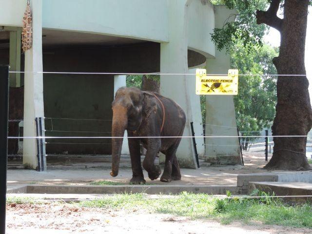 Tháo xích cho Voi ở vườn thú Hà Nội - ảnh 1