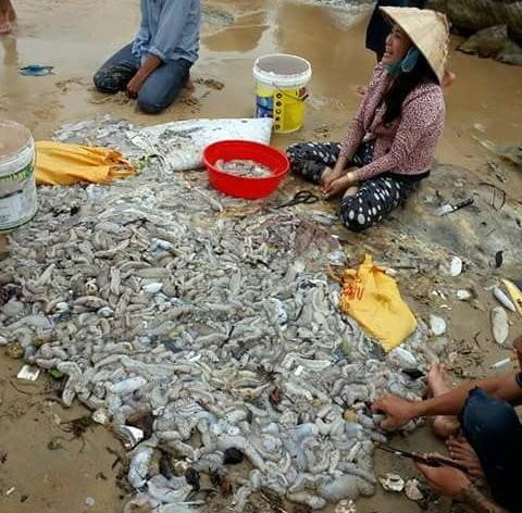 Nhiều người dân và du khách vớt hải sâm tại khu vực biển Dinh Cậu (thị trấn Dương Đông) - ảnh Lê Khoa