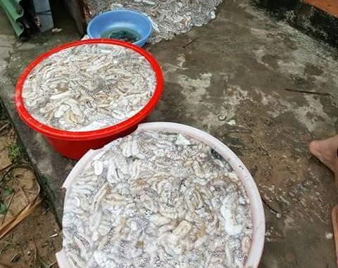 Nhiều người dân và du khách vớt hải sâm tại khu vực biển Dinh Cậu (thị trấn Dương Đông) - Ảnh: Lê Khoa