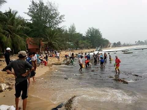 Bãi biển khu vực khách sạn Eden Phú Quốc ( xã Dương Tơ, Phú Quốc) xuất hiện hàng ngàn con hải sâm - Ảnh: Nguyễn Thảo Ly
