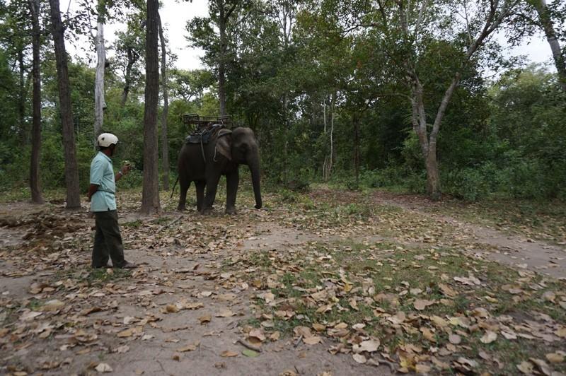 Giám đốc Vườn Yok Don than khó quản lý rừng - ảnh 1