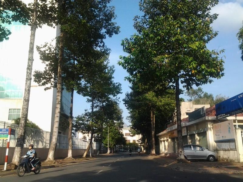 Bình yên ở con đường ngắn nhất Biên Hòa - ảnh 2