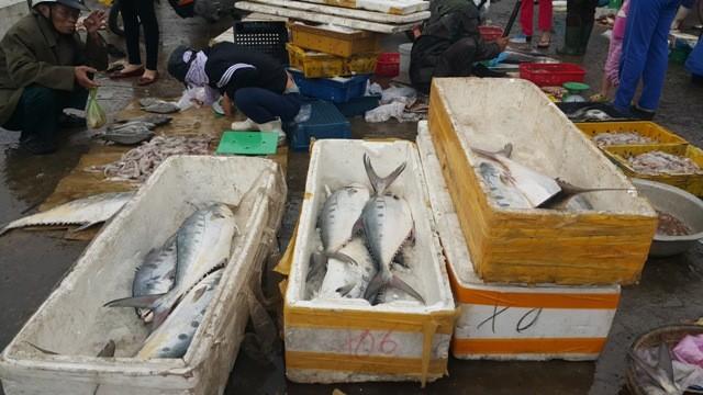 Dân ùn ùn đổ ra chợ vì ngư dân trúng đậm cá bẹ xước  - ảnh 5