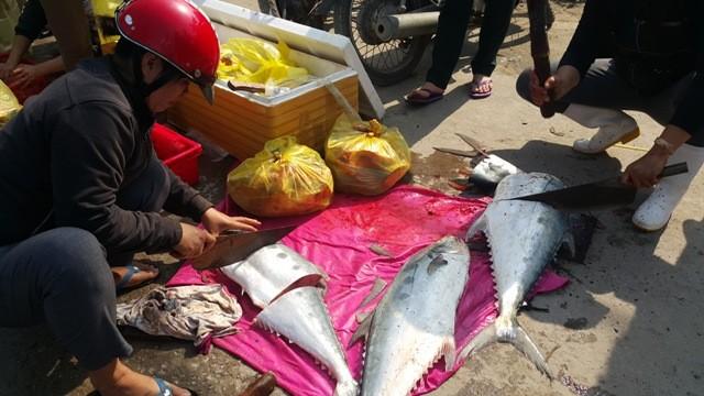 Dân ùn ùn đổ ra chợ vì ngư dân trúng đậm cá bẹ xước  - ảnh 6
