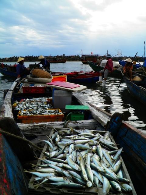 Dân ùn ùn đổ ra chợ vì ngư dân trúng đậm cá bẹ xước  - ảnh 8