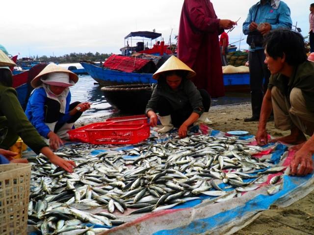 Dân ùn ùn đổ ra chợ vì ngư dân trúng đậm cá bẹ xước  - ảnh 9