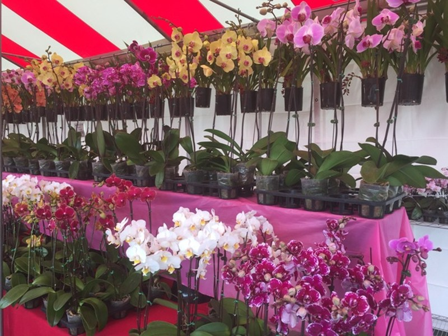 Chợ hoa 'rất Việt Nam' ngay trên đất Mỹ - ảnh 6