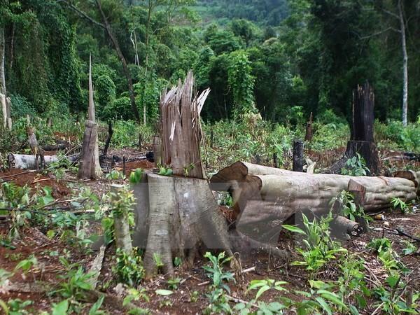 Khởi tố vụ phá rừng tại Khu Bảo tồn Nam Nung ở Đắk Nông - ảnh 1