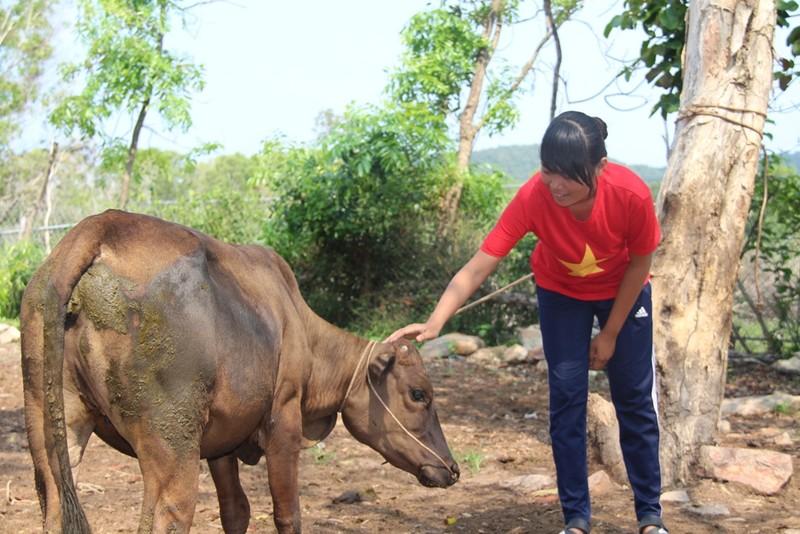 Em Sơn Thị Trâm vuốt ve làm quen con bò mà các anh chị vừa mới tặng.