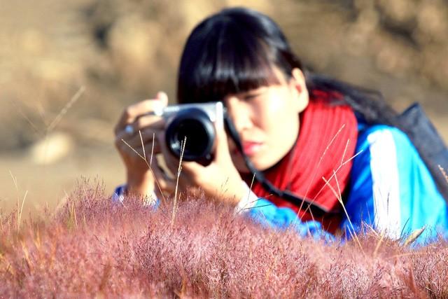 Chiêm ngưỡng mùa cỏ hồng đẹp như tranh vẽ ở Đà Lạt - ảnh 7