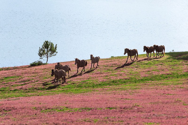 Chiêm ngưỡng mùa cỏ hồng đẹp như tranh vẽ ở Đà Lạt - ảnh 9