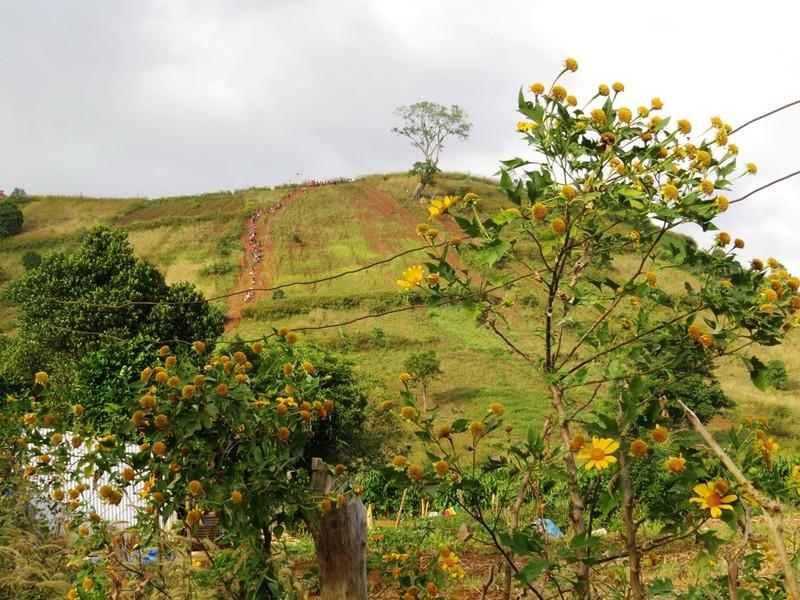 Sắc vàng hoa dã quỳ trải khắp các triền đồi
