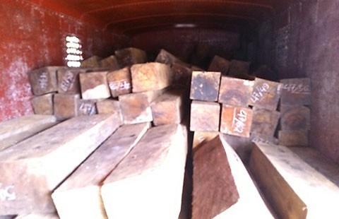 Bắt đầu nậu buôn gỗ lậu bằng hồ sơ giả - ảnh 1