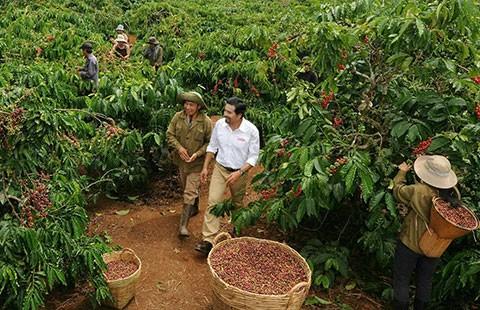 Cà phê Trung Quốc bít đường cà phê Việt? - ảnh 1