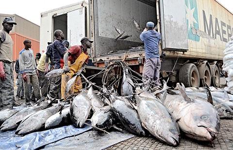Tàu cá Trung Quốc vét cá Tây Phi - ảnh 1
