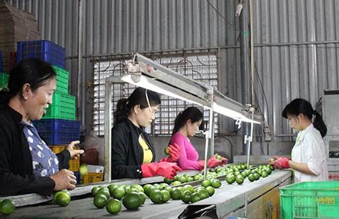 Để Hàn Quốc hút hàng Việt: Cách nào? - ảnh 1