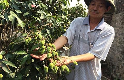 Bám Trung Quốc, nông sản bị rẻ rúng - ảnh 1